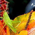 Green Grasshopper by imagetj