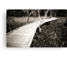 Mangrove boardwalk Canvas Print