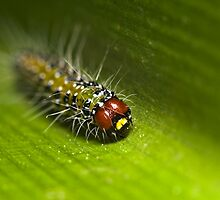Caterpillar by Colin  Ewington
