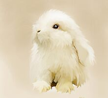 Young White Rabbit by Bamalam Art and Photography