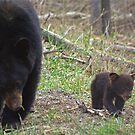 Taking Baby Bear For  Stroll by Molly  Kinsey
