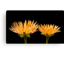 Golden Ice Plant Canvas Print