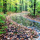 rainy autumn nature walk by foozma73