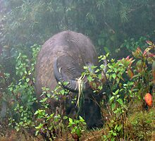 Buffalo in the mist - Sapa by Keith Russell
