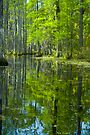 The Reflecting Pool © by Mary Campbell