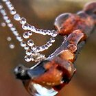 Water jewel with bokeh by Nadia Korths