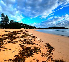 Palmie - Sydney Beaches - Palm Beach, - The HDR Series - Sydney,Australia by Philip Johnson