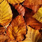 Autumn Leaves by Kylie Reid