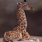 Baby Giraffe by Krys Bailey