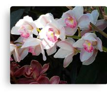 Orchid Dance Canvas Print
