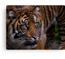 Waiting for prey Canvas Print