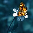 Lacewing by NaturalPhotos