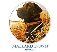 Mallard Down - Saw Grass Black Lab Photographic Print