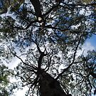 Look Up! by Catherine Davis