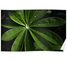 Lupin Leaf Poster