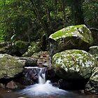Graceful Serenity by Peter Wilson