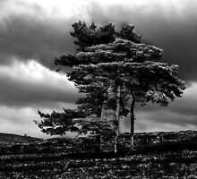 Lyme Park Tree by Matthew Metcalf