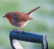 Robin on a spade handle by Gerry Allen
