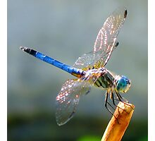 Oh Dragonfly Photographic Print
