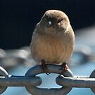 bird on a chain II by Troy Spencer