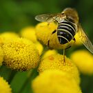 Hairy Bum(ble) Bee by Deanna Roberts Think in Pictures