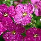 Droplets by Daniel Knights