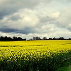 A SEA OF YELLOW by TIMKIELY