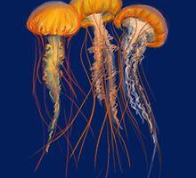 Sea Nettle by acoollamb