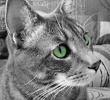Green Eyed Monster by MichelleR
