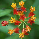 Fly on Flowers by Dave Martin