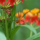Assassin bug is coming for you by Dave Martin