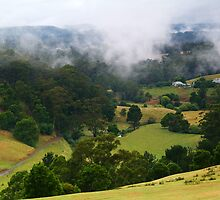 Otway Farmlands, Forrest  by Joe Mortelliti
