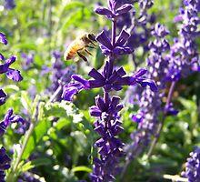 Purple Bee by studiok