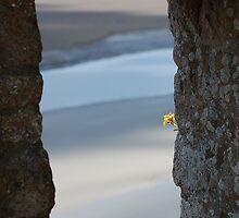 Fenêtre ouverte sur la baie du Mont ST Michel....... by lilifrog