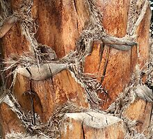 Palm Bark by bobmarks