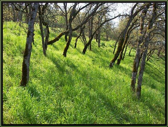 green hillside by Jimmy Joe