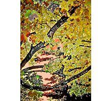 Trees #10 Photographic Print