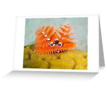Christmas tree tube worms Greeting Card