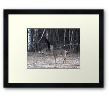 My First Spring Doe Framed Print