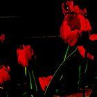 Tulips in the dark by Judi Taylor