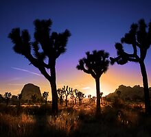 Joshua Tree National Park Series - Being Dusk by Philip James Filia
