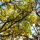 Australian Autumn - 2 by beeden