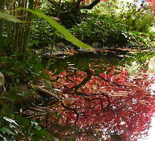 Australian Autumn - 3 by beeden