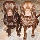 2 Chocolate Beauties, Lexie & Snickers by tawaslake