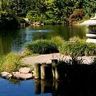 The Serenity of a Garden Pond    ^ by ctheworld