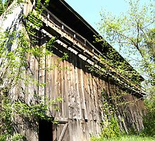 Little Barn Door by kimbarose