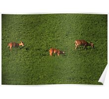 Deer in Bean Field Poster