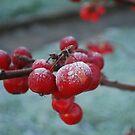 Frozen Red Berry by Geraldine Miller