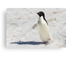 "Adelie Penguin  ~  ""The Dancer"" Canvas Print"