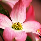 Pretty Pink by Gabriel Martinez
